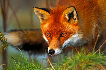 Firefox può sopravvivere nell'era Google?